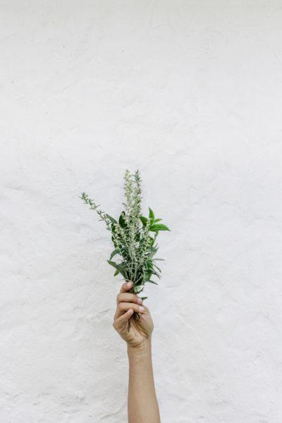 Viele Pflanzen haben eine heilende und gesundheitsfördernde Wirkung auf deinen Körper.