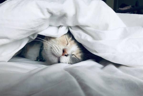 Ausreichend Schlaf ist wichtig für dein Immunsystem und damit deine körperliche und geistige Belastbarkeit.