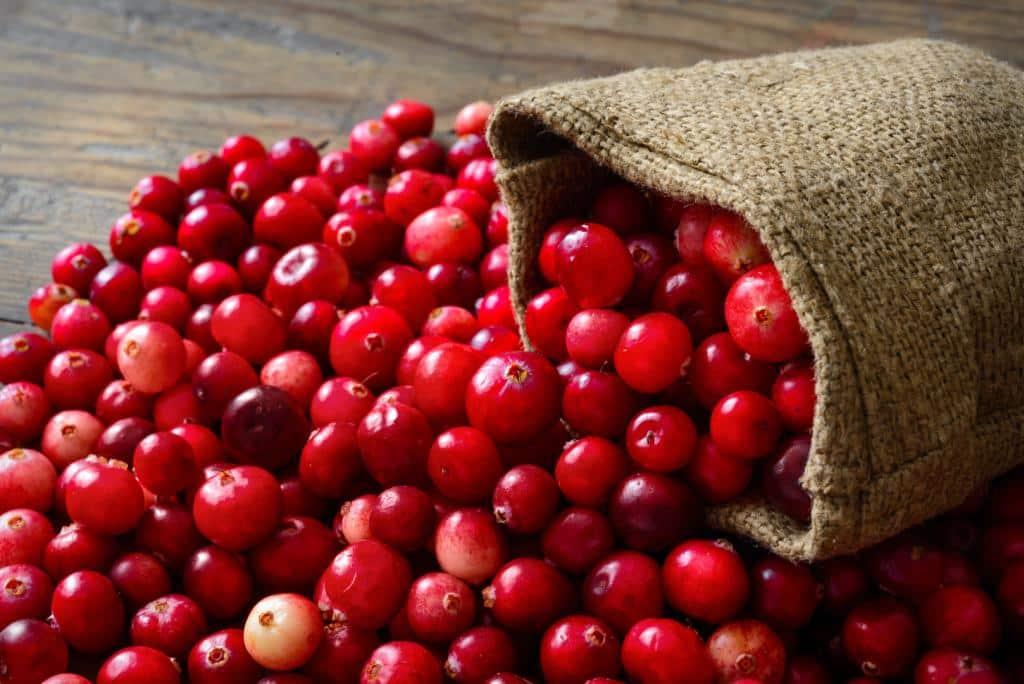 Cranberry bei Blasenentzündungen